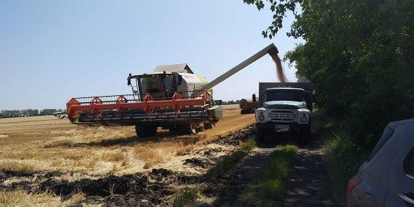 Секретакрка Николаевсая область - сбор урожая. Применение технологии Cultan